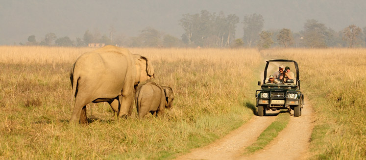 Jim Corbett National Park Best Family holiday in budget, Uttarakhand