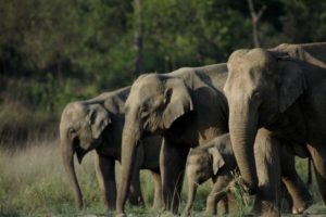 Rajaji National Park Park Best Family holiday in budget, Uttarakhand