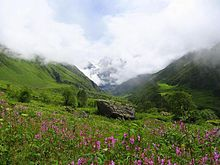 Valley of Flowers National Park Best Family holiday in budget, Uttarakhand