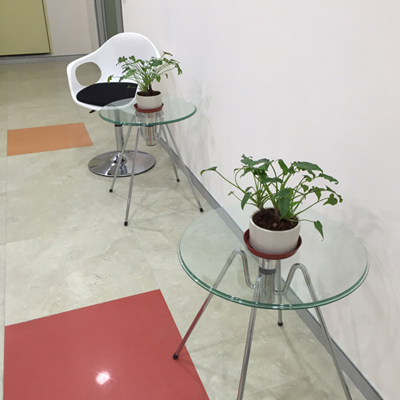 Indoor & Outdoor Plants on Rent in Gurgaon