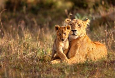 Affordable Jim Corbett Tour Packages Starts from 2999/-