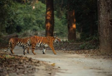 Family Holiday Packages to Jim Corbett